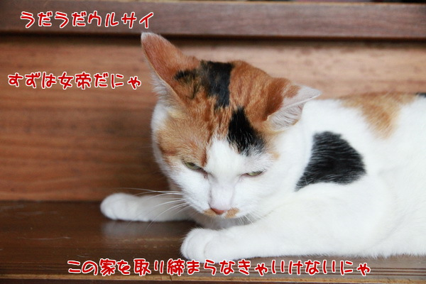 20130619000801203.jpg