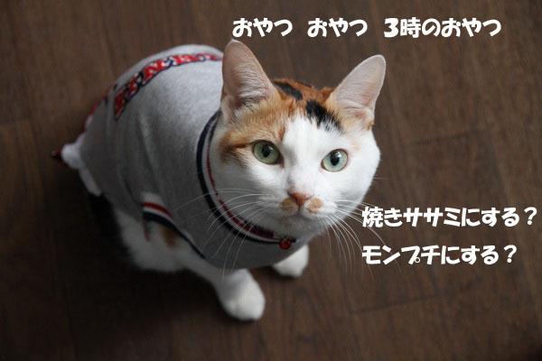IMG_0720.jpg