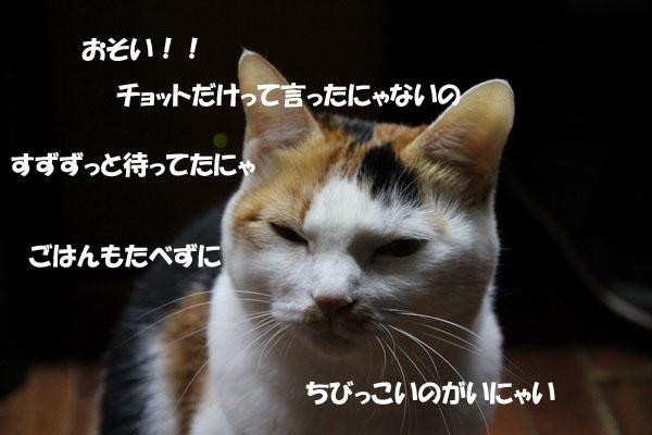 IMG_1511.jpg