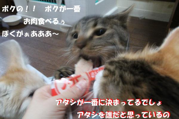 IMG_7328.jpg