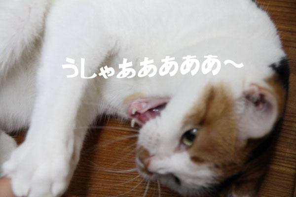 IMG_8588.jpg