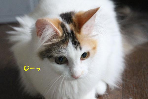 IMG_4595_20120707004928.jpg