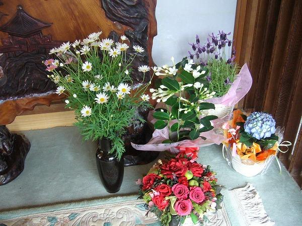 マザ^ーディのお花たち