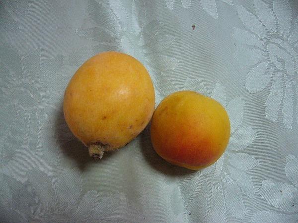 梅の実 ビワの実