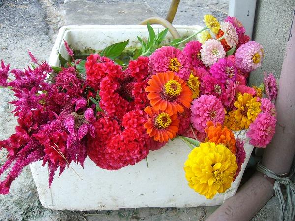 お墓に持って行くお花