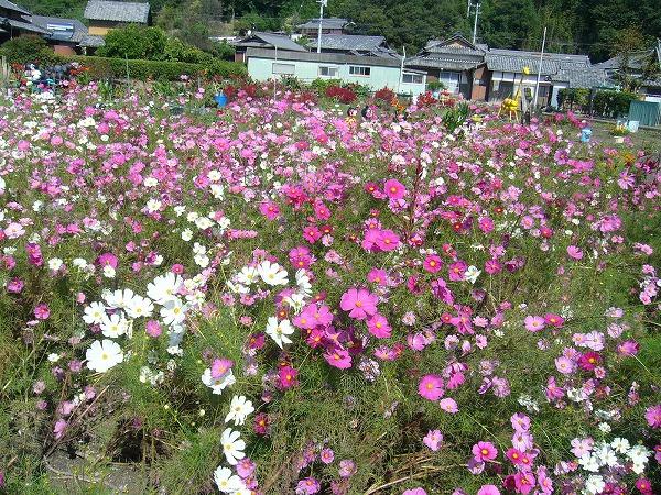 早苗ちゃんの花畑