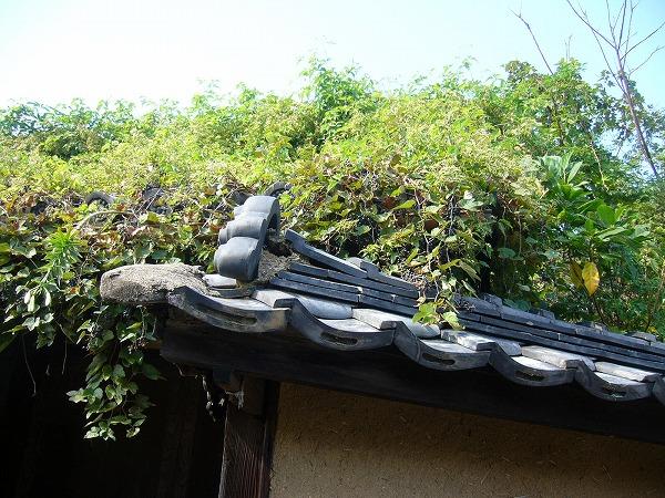 塀の中の雑木