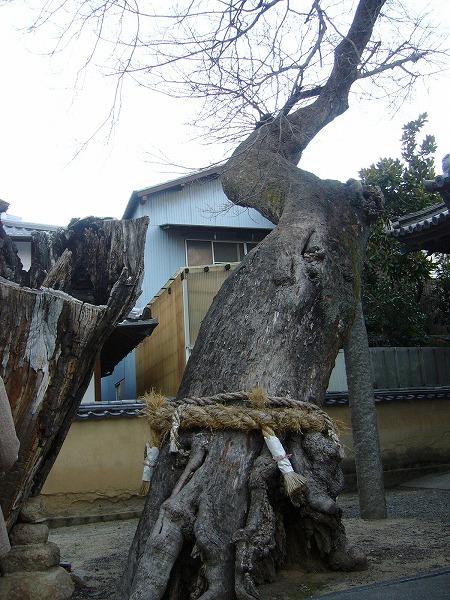 大きな樹の元