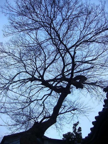 大きな樹スゴイ