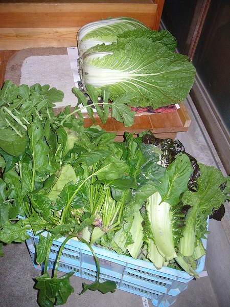 野菜がいっぱい