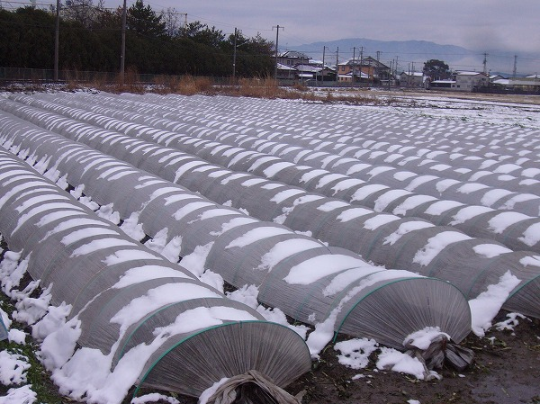 雪の田んぼ26.2.14