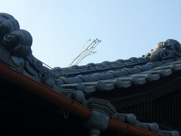 屋根の上に草