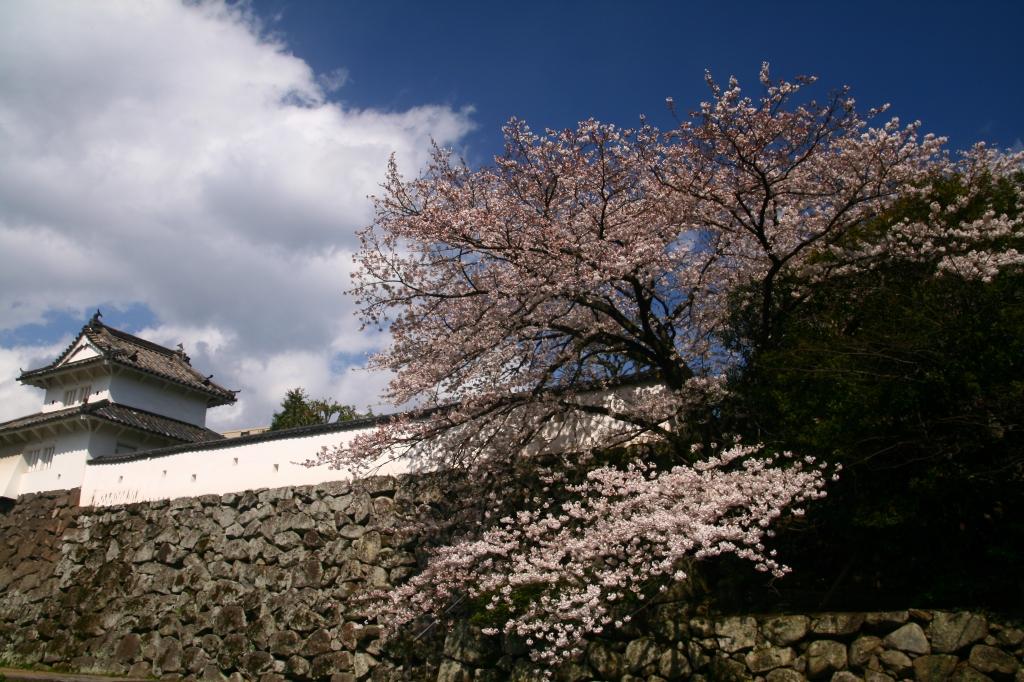 s-桜20120402 019