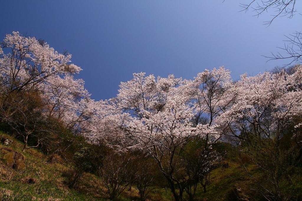 s-sakura201104010 072
