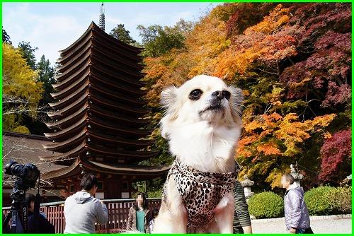 談山神社0725