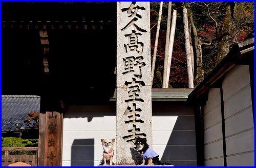 室生寺3759