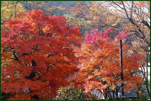 枚岡公園0871