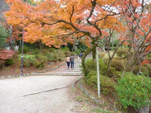 4丸山公園 (7)_resized.jpg