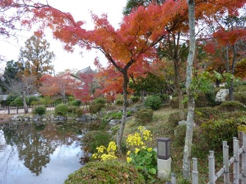 4丸山公園 (6)_resized.jpg