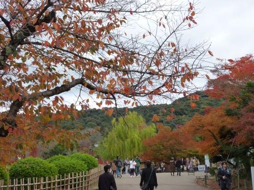 4丸山公園 (1)_resized.jpg