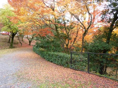 4丸山公園 (9)_resized.jpg