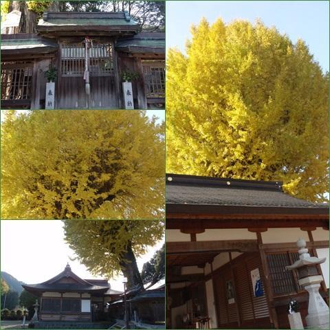 icho_convert_20131125194249.jpg