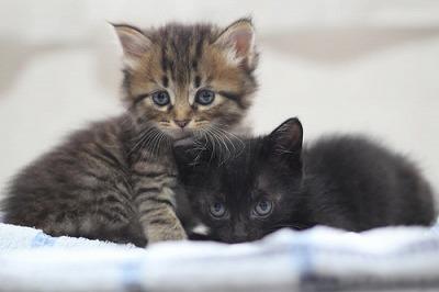 s-里親募集中の猫ちゃん