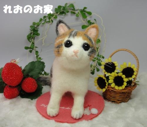 三毛子猫1