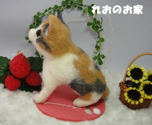 三毛子猫3