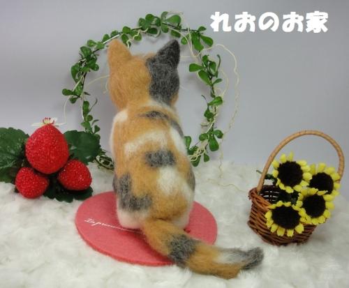 三毛子猫4