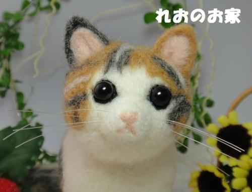 三毛子猫5