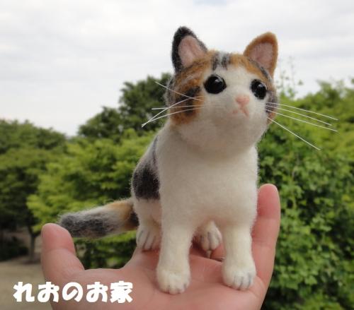 三毛子猫6