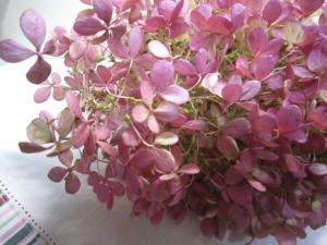 010_convert_20111024200605.jpg