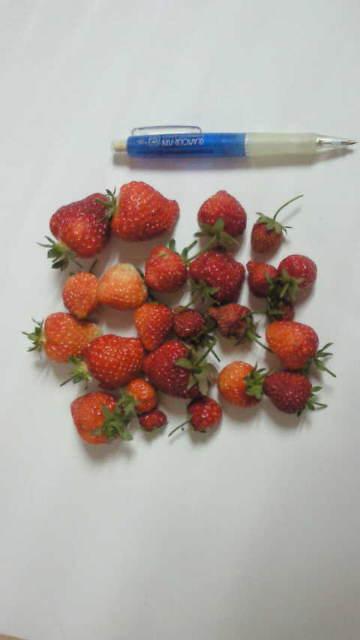201205いちご2