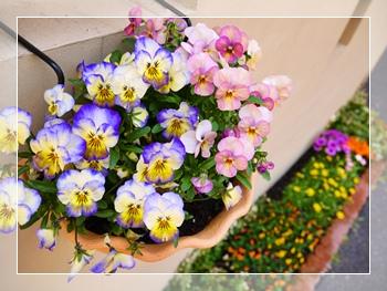 花壇のお花1