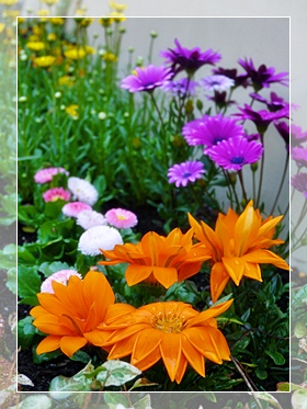 花壇のお花2