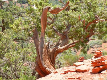 ねじれた木その1