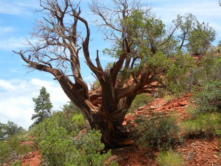 ねじれた木その2