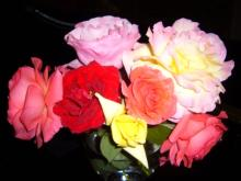 rose09