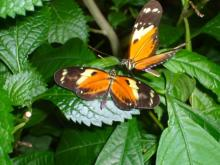 アラバマ生活雑記帳-Butterflygarden04