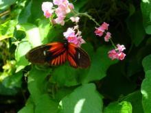 アラバマ生活雑記帳-Butterflygarden03