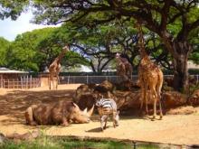 アラバマ生活雑記帳-Honolulu Zoo 3