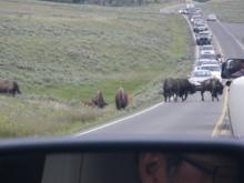 アラバマ生活雑記帳-Yellowstone 18