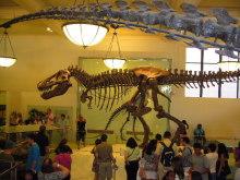 $アラバマ生活雑記帳-自然史博物館恐竜の骨