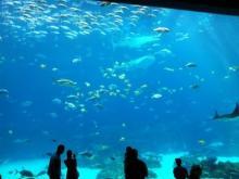 $アラバマ生活雑記帳-aquarium