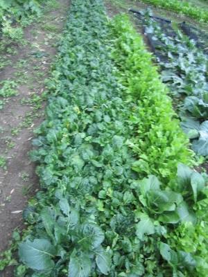 2013.12.21家庭菜園5