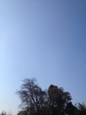 2013.12.29開墾2