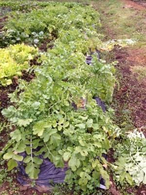 2014.1.3家庭菜園2