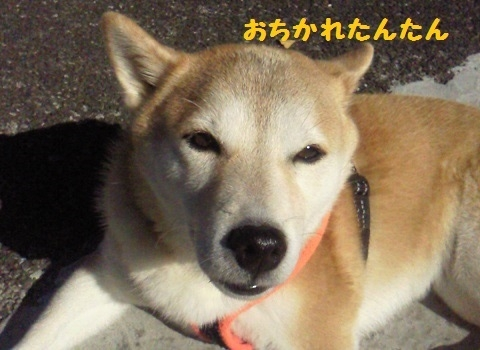 おちかれ1119
