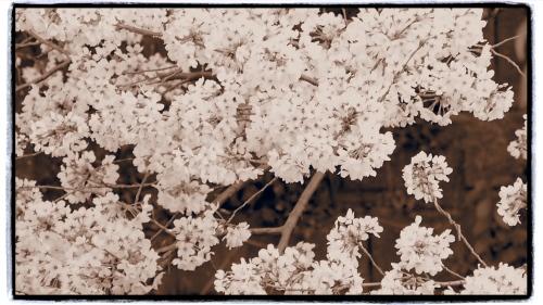 オリンパスPENのアートフィルター【ジェントルセピア】にフレーム効果をプラスして撮影。